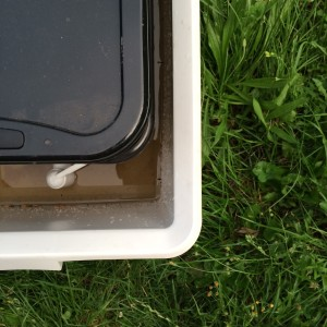Die Wurmkiste und die Wanne dürfen sich nicht berühren, sodass der Wassergraben eine unüberwindbare Barriere für die Ameisen darstellt.